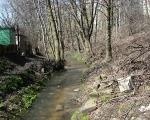 Ślepiotka w okolicy ogródków działkowych - poniżej mostu kolejowego