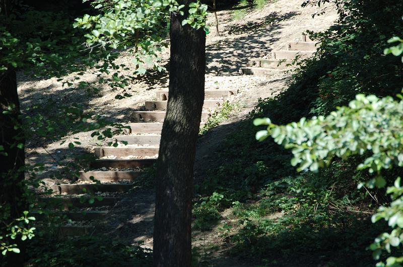 Zejście ze skarpy porośniętej lasem grądowym, na której dosadzono kila tysięcy bylin