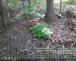 Jar nad Ślepiotką (ul. Jankego) - brzegi umocnione przez drzewa