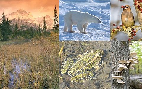 """""""Podróż w krainę bioróżnorodności"""" – prelekcja"""