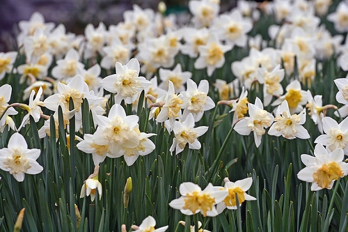 Bądź piękna na wiosnę…