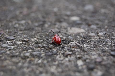 Tajemniczy świat owadów